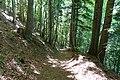 Forêt @ Montagne des Voirons (51210694967).jpg