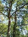 Forêt de la Coubre 038.jpg