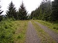 Forestry road at Archer Cleugh, Kielder. - geograph.org.uk - 501698.jpg