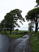 File:Fork in the road - geograph.org.uk - 174753.jpg