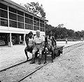 Fotograaf Willem van de Poll met twee boslandcreolen op een kar bij Kabelstation, Bestanddeelnr 252-5961.jpg