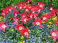 Frühlingsblumen - panoramio.jpg