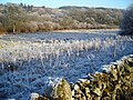 Frosty Field Near Birkbush - geograph.org.uk - 638100.jpg