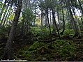 Fundy Park Forests (15428308426).jpg