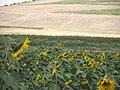 Günebakanlar - panoramio.jpg