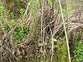 Gaotou - Jin Mountain - terrace remainders - detail - DSCF3282.JPG