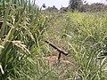 Garden tool Chalagapara (3).jpg