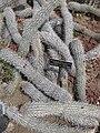 Gardenology.org-IMG 4423 hunt0904.jpg