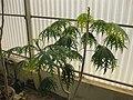 Gardenology.org-IMG 8030 qsbg11mar.jpg