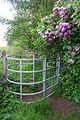 Gate and lilac tree - geograph.org.uk - 169433.jpg