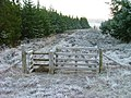Gate to the forest - geograph.org.uk - 1094455.jpg