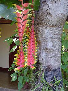 Geckos+flower+tree.jpg