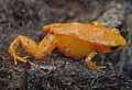 Genoa Aquarium - frog.jpg