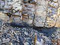 Geotop Südwesthang des mittleren Deisters, fallende Schichten mit Hauptflöz.jpg