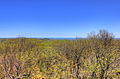 Gfp-michigan-porcupine-mountains-state-park-forest-around-the-lookout.jpg