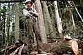 Gifford Pinchot National Forest, timber harvest operations-3 (37001813072).jpg