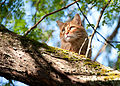 Gillie likes it in the tree (5805608901).jpg