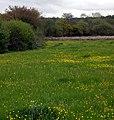 Glanyrynys Farmland - geograph.org.uk - 1301756.jpg