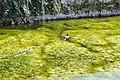 Goussainville mare au canard Eure-et-Loir France.jpg