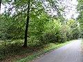 Grabhügelgruppe Hartwald Wald 1.jpg