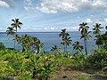 Grande Comore palm trees.jpg