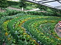 Grandstand view for the veg at The Eden Project - geograph.org.uk - 1423263.jpg
