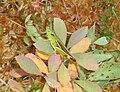 Grasshopper8475.jpg