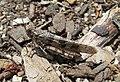 Grasshopper scotts valley 2.jpg