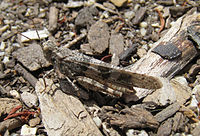 Grasshopper scotts valley 2.jpg