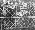 Grave of Safuir Rahman 21 Feb 1953.png