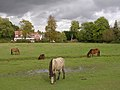 Grazing ponies, Ashurst, New Forest - geograph.org.uk - 68726.jpg