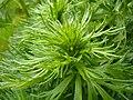 Greenplant5.jpg