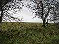 Grown out hedge, Haye Park - geograph.org.uk - 964589.jpg