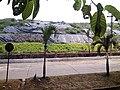 Gunung Sampah yang sudah mulai ditumbuhi rerumputan, sudah tidak berbau lagi (depan PLTSa Bantargebang, Kota Bekasi) - panoramio.jpg