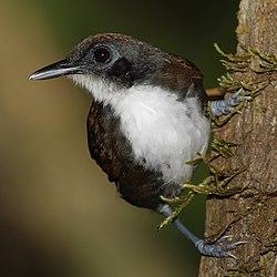 Paukščiai žemesnės klasifikacija