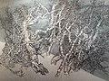 HK 灣仔北 Wan Chai North 香港會展 HKCEC 佳士得 拍賣 Christie's Auction 預展 preview November 2020 SS2 55.jpg