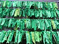 HK Admiralty Tamar Square Ribbon message 003 Green Sept-2012.JPG