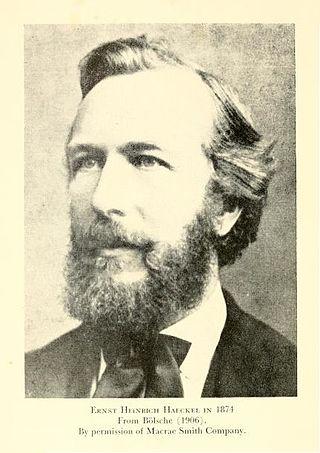 Haeckel 1874.jpg