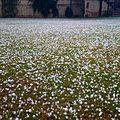 Hailing in Islamabad.jpg
