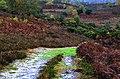 Hale in autumn - panoramio.jpg