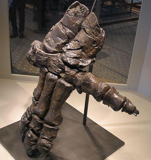 Hand of an Iguanodon 28-12-2007 15-22-03