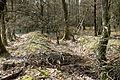 Hanstedt Eitzen II - Wegspuren 07 ies.jpg