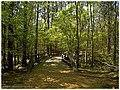 Hawthorne Loop - Flickr - pinemikey.jpg