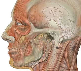 Facial toning - Facial muscles