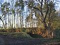 Heads Plantation - geograph.org.uk - 125371.jpg