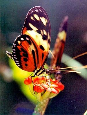 Butterfly feeding from flower