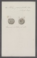 Helix panorbella - - Print - Iconographia Zoologica - Special Collections University of Amsterdam - UBAINV0274 089 01 0034.tif