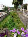 Hirtzbach-Ruisseau (3).jpg