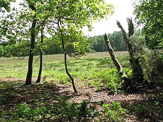 Beetley and Hoe Meadows - Image: Hoe Rough Nature Reserve geograph.org.uk 1310170