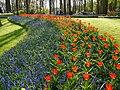 Holandia Keukenhof - panoramio (14).jpg